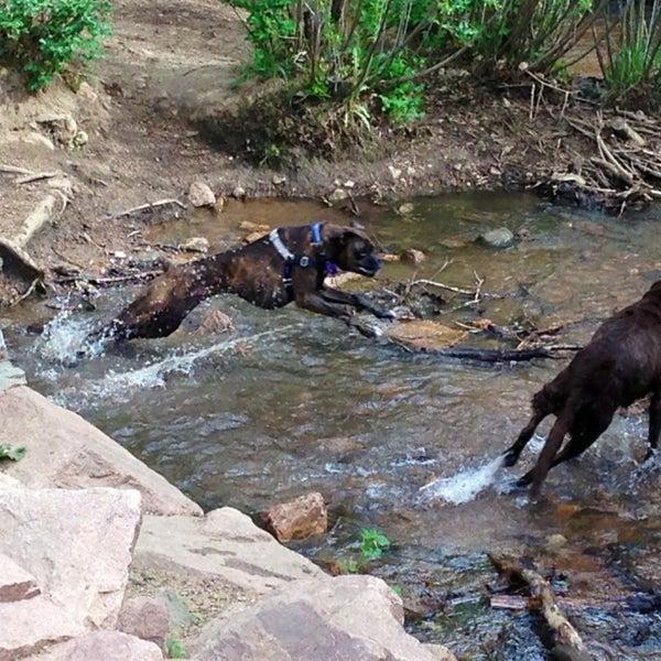 Bear Creek Dog Park Colorado Springs Co