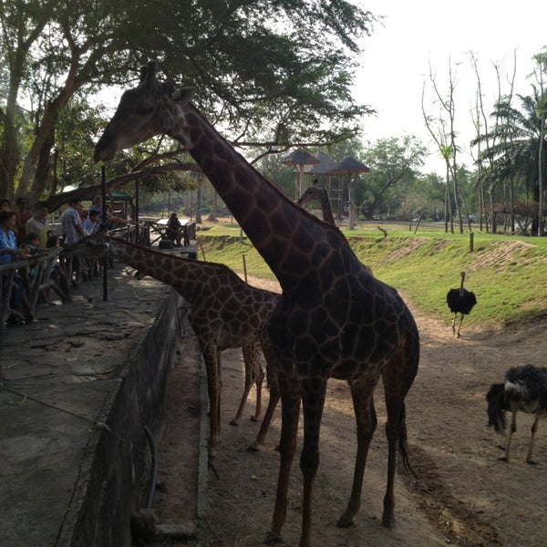 Photo taken at Khao Kheow Open Zoo by khunnad on 1/5/2013
