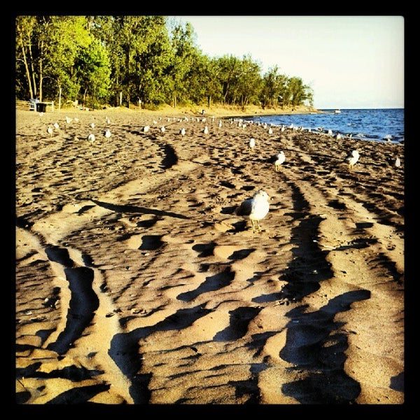 Hanlans Point Beach - Beach In Centre Island-9606