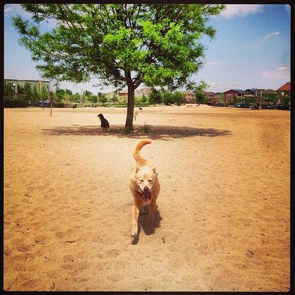 Stapleton - Dog Parks