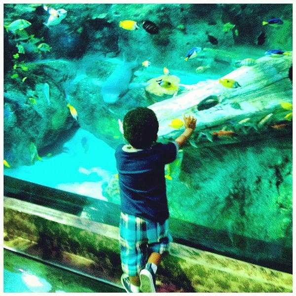 Sea Life Grapevine Aquarium Grapevine Mills 26 Tips