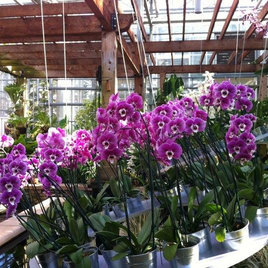 Photo taken at Atlanta Botanical Garden by dunlive on 3/8/2012