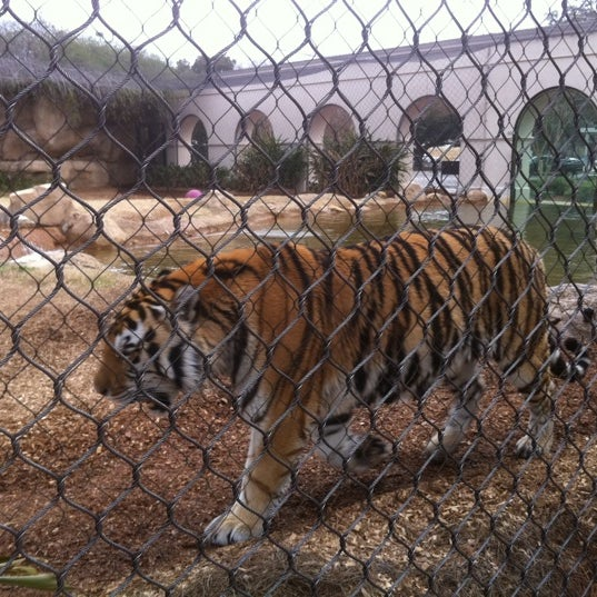 Mike VI is active in the mornings.