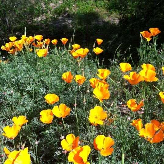 Photo taken at Laguna Canyon Dog Park by Dean G. on 4/6/2012