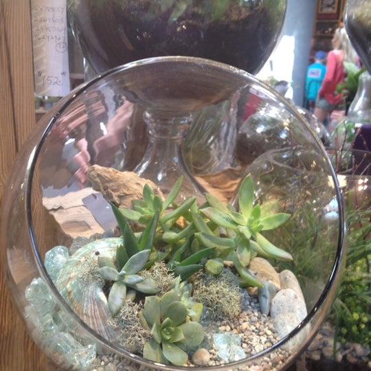 Don't miss the fall Terrarium work shops with Deborah.  And they serve wine:)