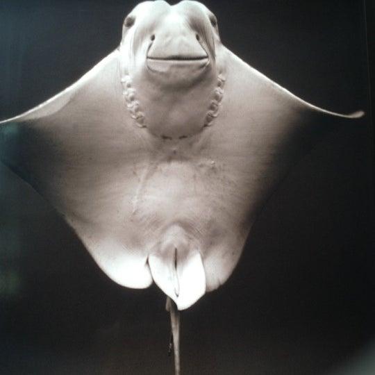 Photo taken at National Aquarium by Jinny N. on 6/11/2012