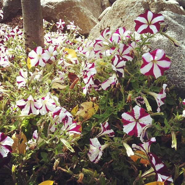 Photo taken at Evergreen Washelli by Matthew C. on 7/28/2012