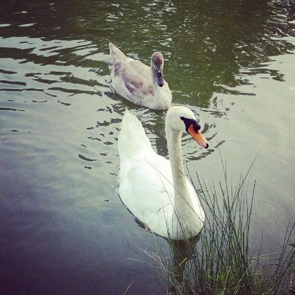 Photo taken at Lac Daumesnil by Malik R. on 8/20/2012