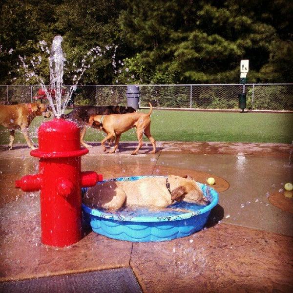 Newtown Dog Park Alpharetta