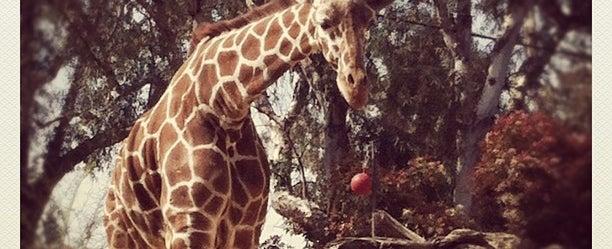 Photo taken at Sacramento Zoo by Margaret F. on 4/7/2012