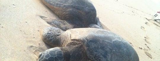 Laniakea (Turtle) Beach is one of Hawaiian Islands Top Picks.