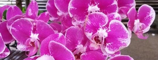 Taman Orkid (Orchid Garden) is one of Garden.