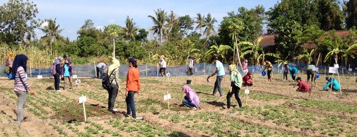 Fakultas Pertanian UGM