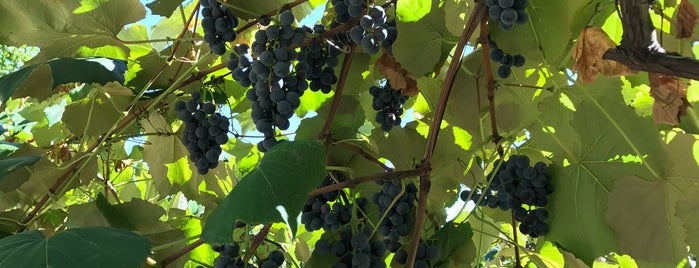 Naples Grape Festival is one of Roc.