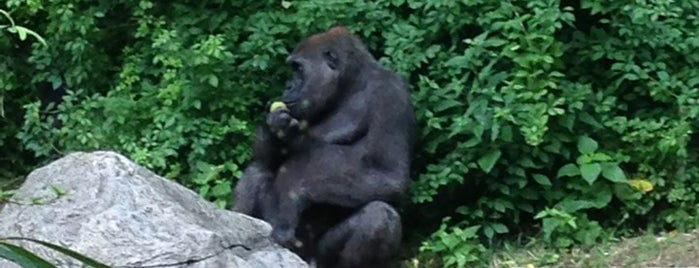 Congo Gorilla Forest is one of Guide to Bronx's best spots.