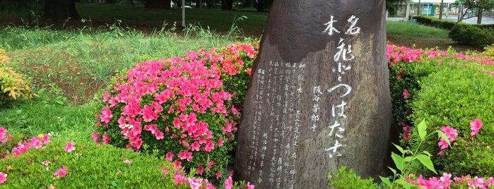 なんじゃもんじゃの木 (ひとつばたご) is one of etc2.
