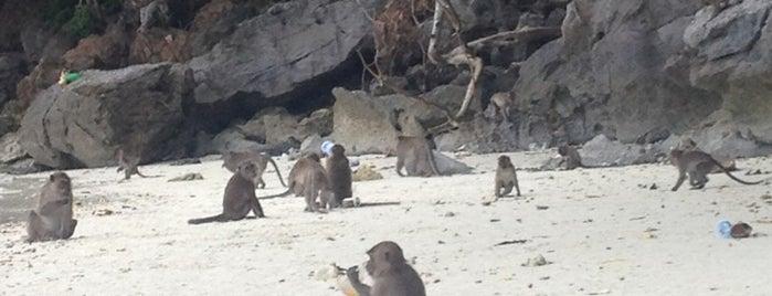 Monkey Beach is one of My TripS :).