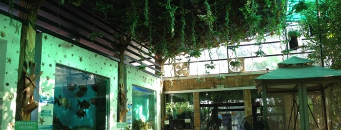 Rainforest Park Cebu is one of Certified Cebu.