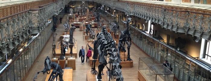 Grande Galerie de l'Évolution is one of Must-visit Museums in Paris.