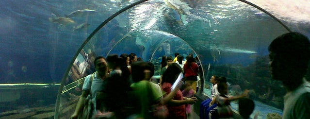 Manila Ocean Park is one of Places I've been to....