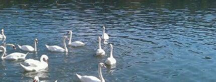 Zbiljsko jezero is one of Favorite Great Outdoors.