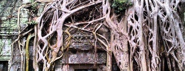 Ta Prohm is one of Siem Reap Sep2012.