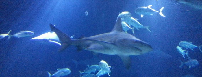 Henry Doorly Zoo and Aquarium is one of Attractions to Visit.