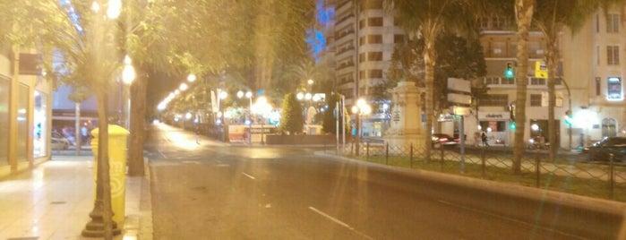 Paseo De Federico Soto is one of Alicante urban treasures.