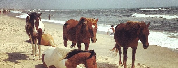 Assateague Island National Seashore (Maryland) is one of Summer Bucket List.