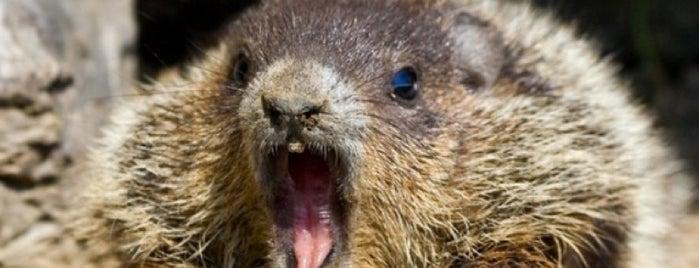 Groundhog Daypocalypse 2013 is one of Listpocalypse.
