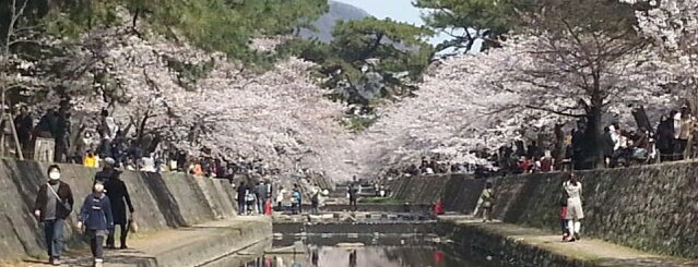 夙川公園 is one of 公園.