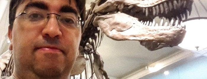 David H. Koch Dinosaur Wing is one of David's Tips.
