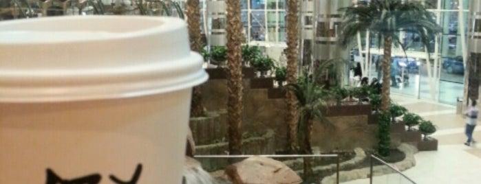 Starbucks | ستاربكس is one of My Doha..