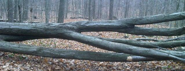 Steckle Woods Kitchener On