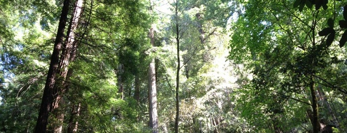 Muir Woods National Monument is one of San Francisco.