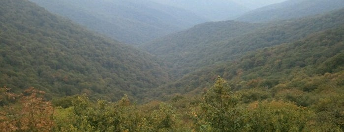 Craggy Gardens is one of Cool spots to visit with kiddos.