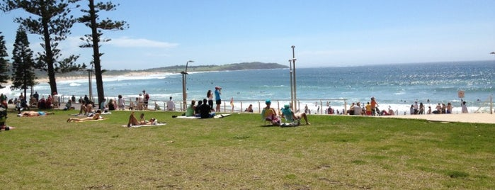 Dee Why Beach is one of Essential Sydney.