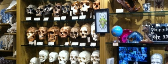 The Evolution Store is one of Strange Places and Oddities in NYC.