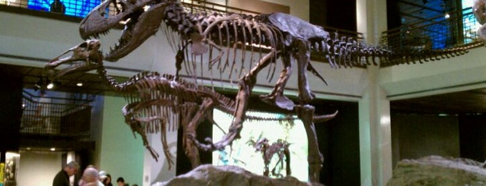 Houston Museum of Natural Science is one of Best Places to Check out in United States Pt 4.