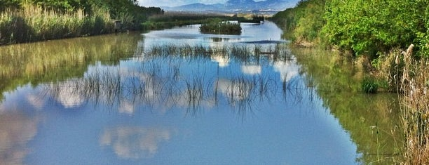 Parc Natural de s'Albufera de Mallorca is one of Mallorca Birdwatching/Ornithology.