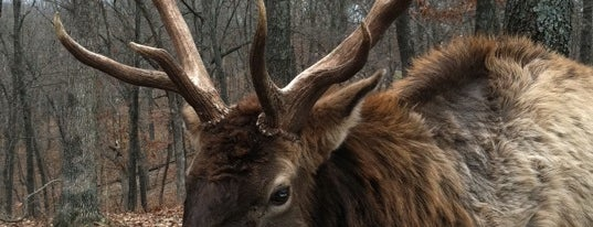 Lone Elk County Park is one of Best Places in #STL #visitUS.