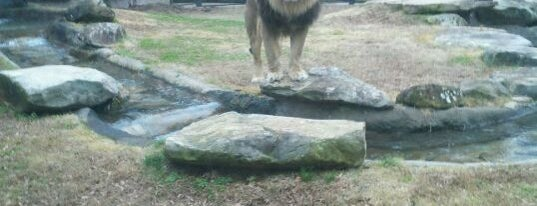 George H. Carroll Lion Habitat is one of Must-visit Places in the Shoals, AL #visitUS.