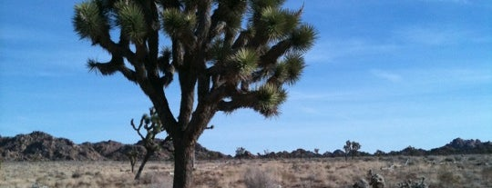 Joshua Tree National Park is one of U.S. National Parks.