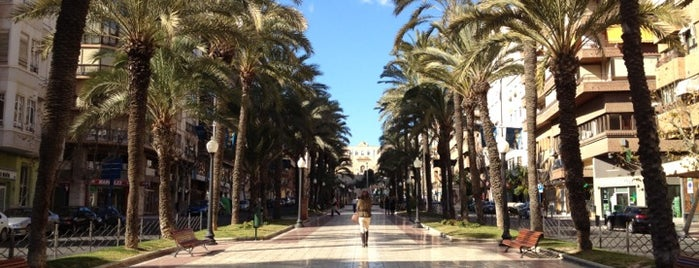 Paseo General Marvá is one of Alicante urban treasures.