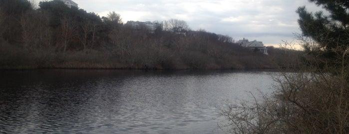 Pilgrim Pond is one of Favorite Spots in PTOWN....