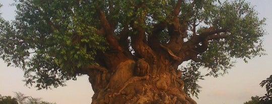 Disney's Animal Kingdom is one of Walt Disney World Parks.