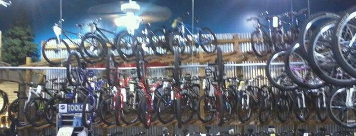Bicycles Etc is one of Hoiberg's Favorite Places in JAX.