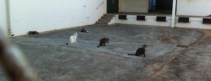 Ala Moana Regional Park is one of Cats in Hawai'i.