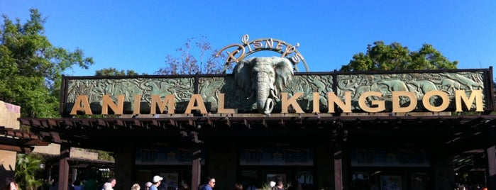 Disney's Animal Kingdom is one of Dicas de Orlando..
