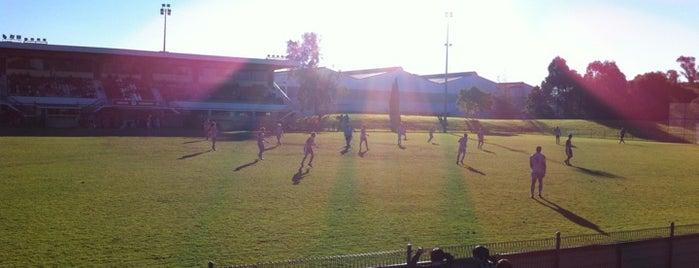 Melita Stadium is one of Soccer.